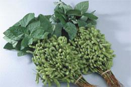 枝豆は昔は枝付きで売られていた