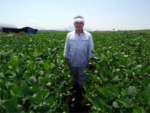 茶豆畑に立つ玉木豊さん